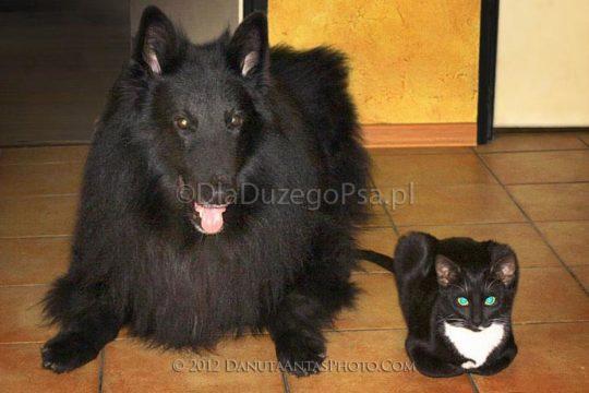 Socjalizacja psa i kota, kot w domu