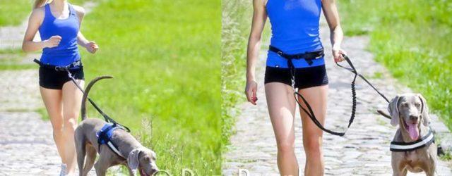 Pas do biegania z psem i smycz z amortyzatorem; pas i smycz z amortyzatorem; pas do biegania z psem; smycz do biegania z psem; pas na biodra do biegania z psem; sporty z psami; jogging z psem; fitness z psem; bieganie z psem; smycze do biegania z psami; hurtownia zoologiczna; sklep zoologiczny; duzepsy.pl