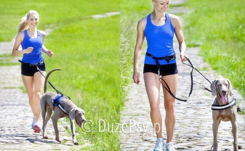 Pas do biegania z psem i smycz z amortyzatorem Dingo – test pasa