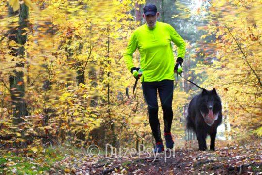 Bieganie z psem. AKcesoria do biegania zpsem. Zdrowie psa.
