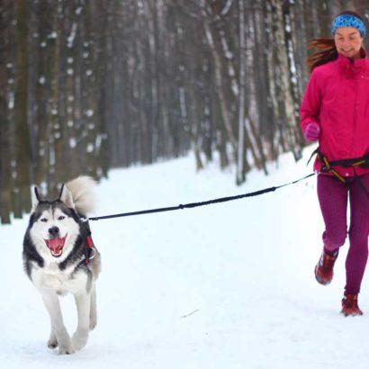 akcesoria do biegania z psem; pas do biegania z psem; jogging z psem akcesoria; bieganie z psem; akcesoria do biegania z psem; smycz do biegania z psem; smycz z amortyzatorem do biegania z psem; sprzęt do biegania z psem; pas do canicrossu; uprząż do canicrossu