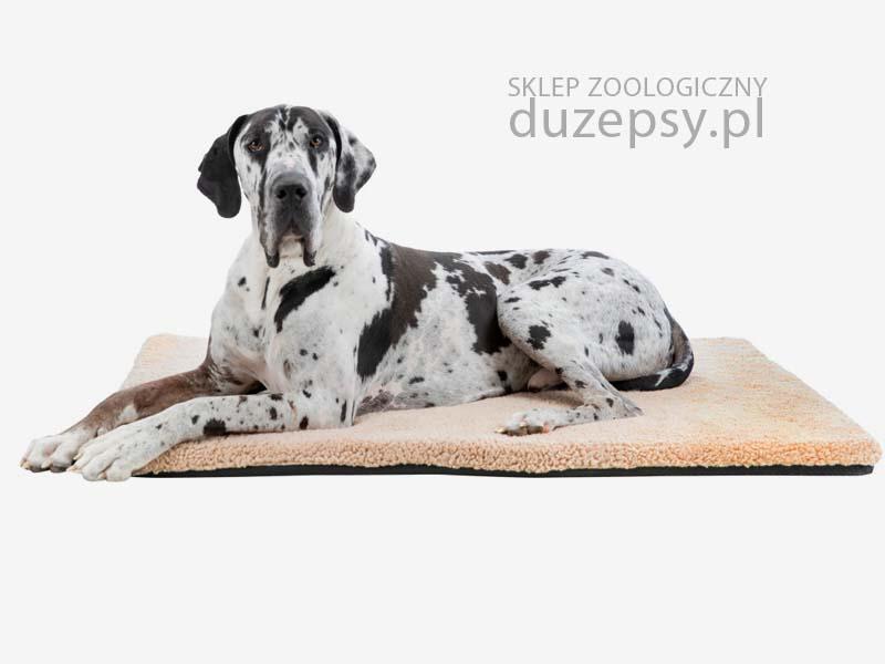 mata ortopedyczna dla dużego psa; legowisko ortopedyczne dla psa; legowisko dla psa memory szare; legowisko dla psa memory foam; legowisko dla psa memory szare; legowiska ortopedyczne dla psów; legowisko ortopedyczne dla dużego psa; legowisko ortopedyczne dla psa 120 cm; legowisko ortopedyczne dla psa 100 cm; legowisko dla psa sklep; legowisko dla psa trixie; mata dla psa wellness; legowiska dla dużych psów; legowiska dla starszych psów; legowisko ortopedyczne dla psa xxl; legowisko dla psa 120 x 80; legowisko dla psa 100 x 70; legowisko dla psa amstaff; legowisko dla psa duże; legowisko dla psa golden retriever; legowisko dla psa husky; legowisko dla psa labradora; legowisko dla psa łatwe do prania; legowisko dla psa owczarka niemieckiego; legowisko dla psa premium; legowisko dla psa rozbieralne; legowisko dla psa szare; legowisko dla psa ze ściąganym pokrowcem; sklep zoologiczny; mata dla psa 100 x 70 cm; mata dla psa 120cm; mata dla dużego psa; materac dla psa prostokątny; legowiska dla psa sklep; legowisko dla psa boksera