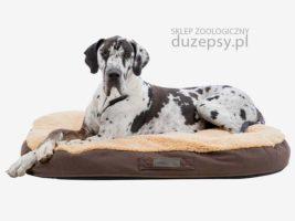 ortopedyczny materac dla dużego psa memory; legowisko ortopedyczne dla psa; legowisko dla psa memory oval brązowe; legowisko memory foam; legowisko dla psa memory foam; legowisko dla psa memory; legowiska ortopedyczne dla psów; legowisko ortopedyczne dla dużego psa; legowisko ortopedyczne dla psa 120 cm; legowisko ortopedyczne dla psa 100 cm; legowisko dla psa sklep; legowisko dla psa trixie; legowisko dla bardzo dużego psa; legowiska dla dużych psów; legowiska dla starszych psów; legowisko ortopedyczne dla psa xxl; legowisko dla psa 120 x 80; legowisko dla psa 100 x 70; legowisko dla psa 80x60; legowisko dla psa amstaff; legowisko dla psa duże; legowisko dla psa golden retriever; legowisko dla psa husky; legowisko dla psa labradora; legowisko dla psa łatwe do prania; legowisko dla psa łatwe w czyszczeniu; legowisko dla psa owczarka niemieckiego; legowisko dla psa premium; legowisko dla psa rozbieralne; legowisko dla psa szare; legowisko dla psa ze ściąganym pokrowcem; sklep zoologiczny; DuzePsy.pl