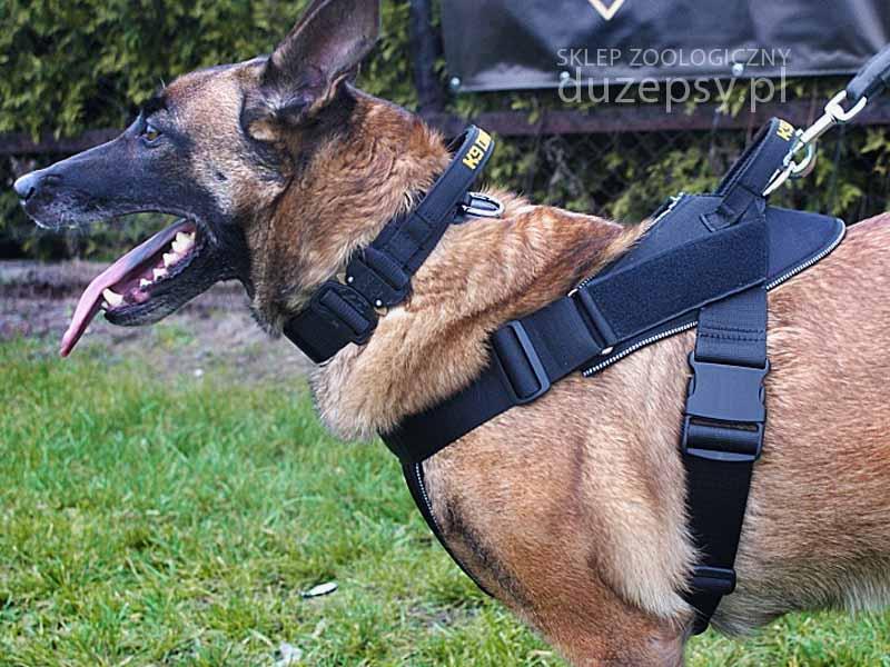 szelki dla owczarka niemieckiego; szelki dla psów policyjnych; szelki dla psa do pracy i szkolenia K9; szelki dla psa owczarek; szelki dla psa obronnego; szelki dla psa policja; szelki dla psa ipo; szelki dla psa z uchwytem; szelki dla psa sklep internetowy; szelki dla psa pitbull; szelki dla psa owczarka niemieckiego; szelki dla psa dużego; szelki dla psa straż; szelki dla psa guard; szelki dla psa amstaff; szelki dla psa dingo; szelki dla psa boksera; szelki dla psa amstaff; szelki dla psów bojowych; szelki dla psa k9; szelki dla psa typu guard; szelki dla psa taktyczne; szelki dla psa wojskowe; szelki dla psa 100 cm; szelki dla psa 40 kg